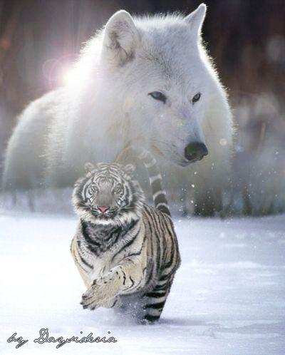 Mon amour pour les loups 6j5x7yhs